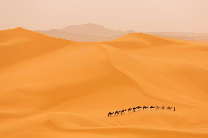 Фото №1 - Сахара увеличилась на 10% за 100 лет