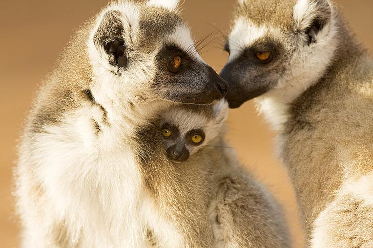 Фото №2 - Зоология: гламурная семейка