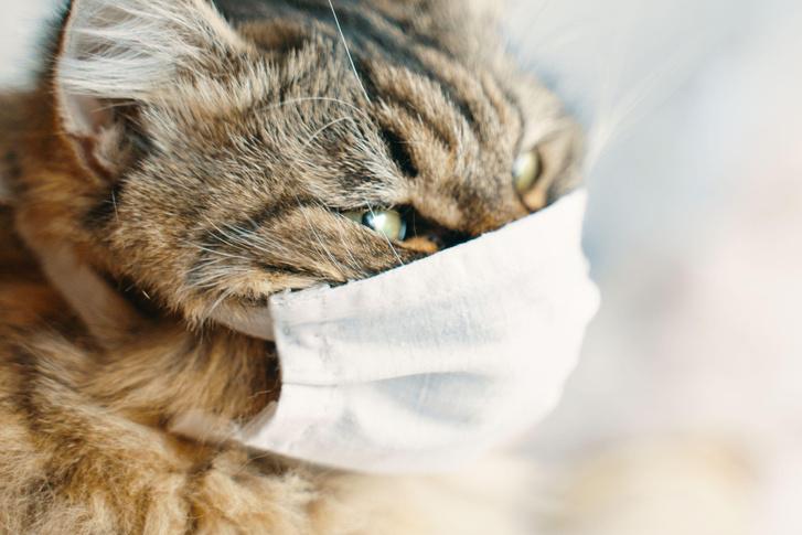 Фото №1 - Ученые выяснили, какие животные могут болеть коронавирусом
