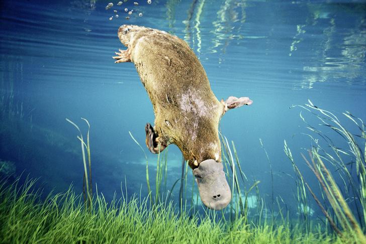 Фото №4 - Зоология: славный счет потерь