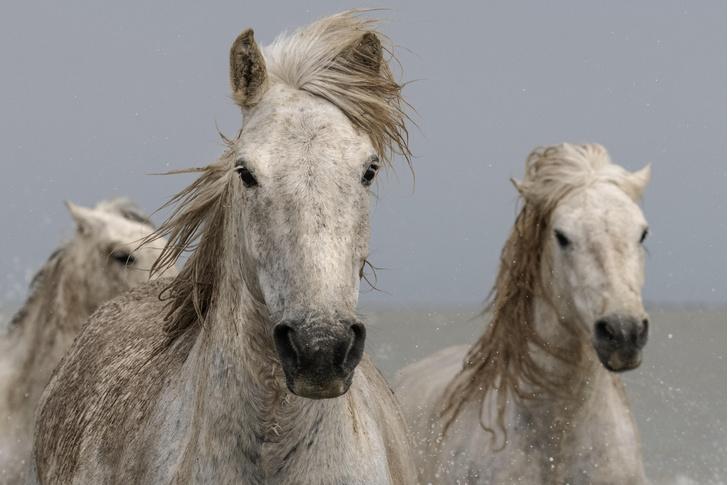 Фото №1 - Лошади запоминают человеческие эмоции