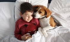 Личный опыт: почему я никогда не заведу ребенку собаку