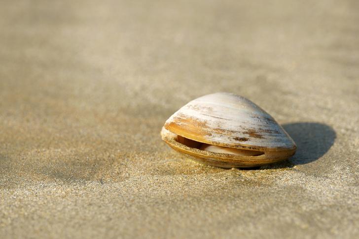 Фото №1 - Рейтинг долгожителей планеты возглавили обитатели морей и океанов