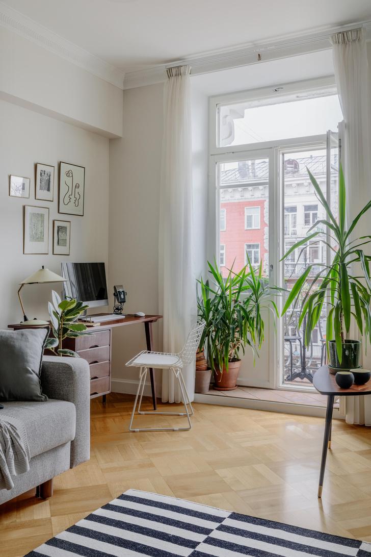 Фото №1 - Как освежить комнатные растения: 6 эффективных советов по уходу
