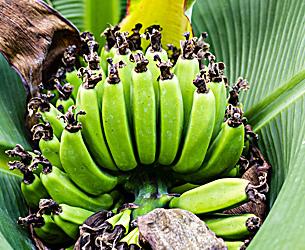 Фото №9 - Рабочий момент: банановый рай