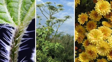 Ядовитые растения, опасные для ребенка.