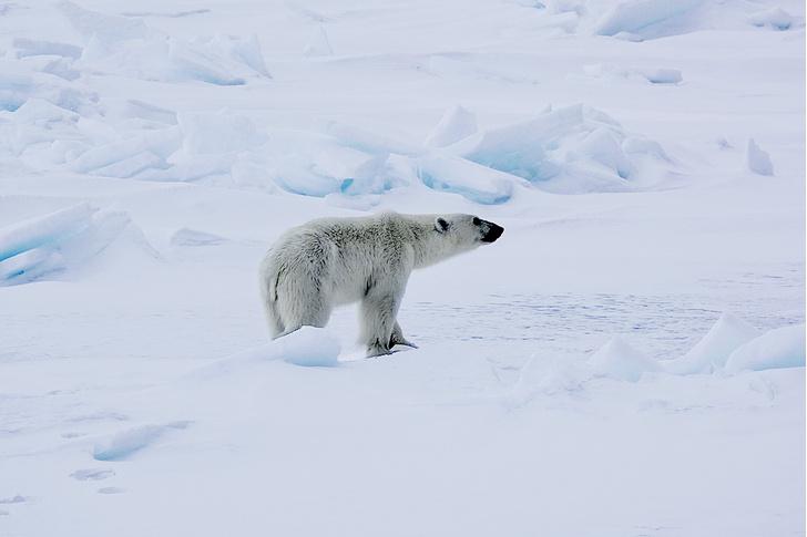 Фото №7 - Замороженное время: путешественник Леонид Круглов среди вечных льдов