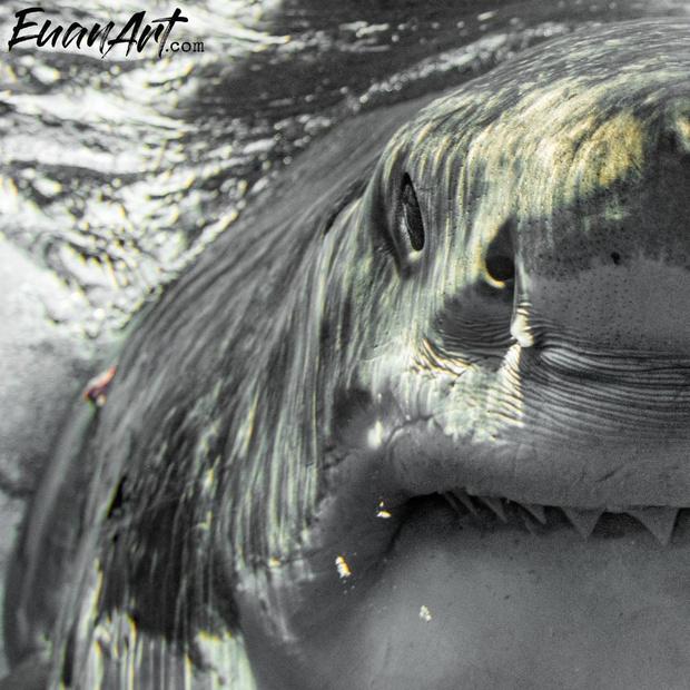 Фото №2 - Галерея: у фотографа хобби снимать акул с такого близкого расстояния, что можно заглянуть им в душу