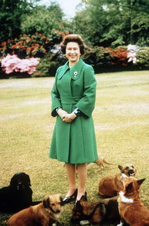 Фото №4 - Неожиданная роль, которую исполняли королевские корги при дворе Елизаветы II