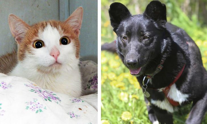 Фото №1 - Котопёс недели: собака Джульетта и кошка Папайя