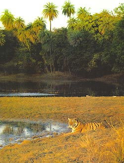 Фото №3 - Не трогай тигра! Засудят...
