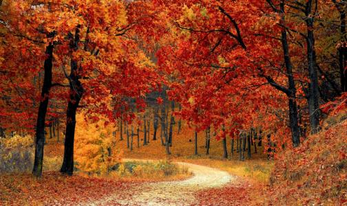 Фото №1 - Терапевт посоветовала осенью не гулять часто в парках и не увлекаться сладким