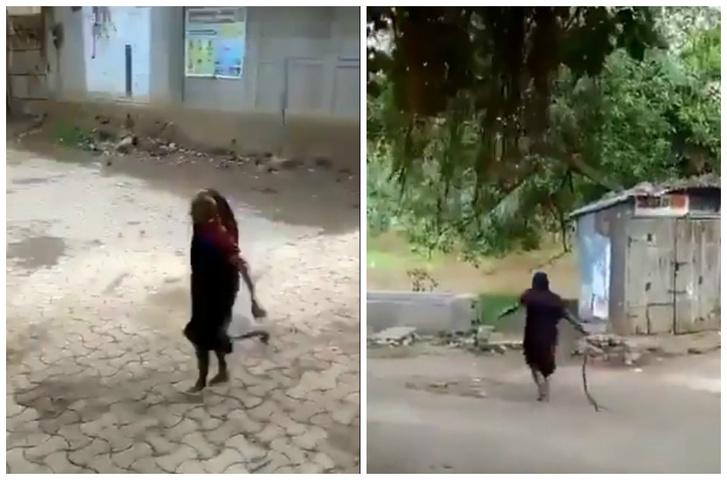 Фото №1 - Бабуля преспокойно несет кобру за хвост со двора и выкидывает подальше (видео)