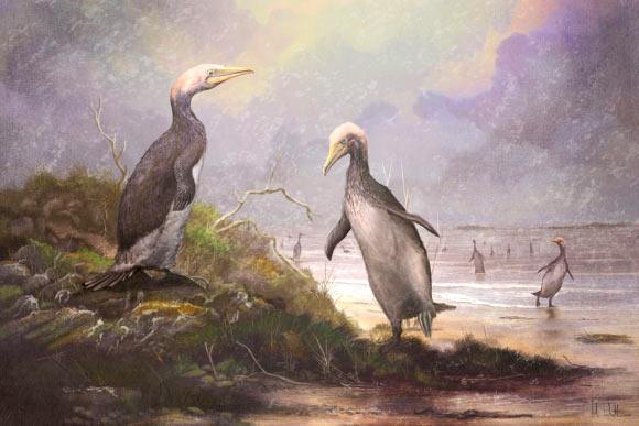 Фото №1 - В Северном полушарии обитали гигантские «двойники» пингвинов