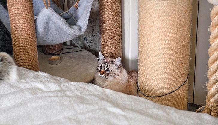 Фото №6 - «Где шесть, там и семь»: кошкин дом Наталии Гулькиной