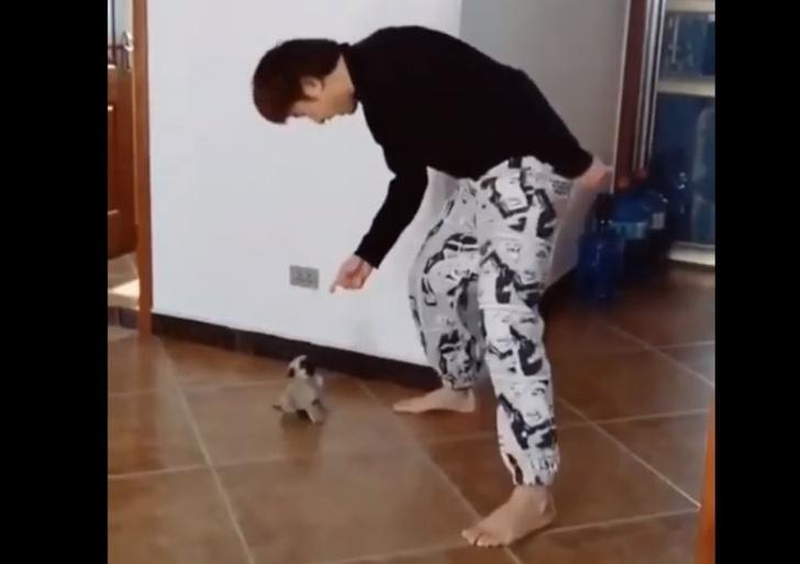 Фото №1 - Хозяин учит щенка мопса кружиться (видео)