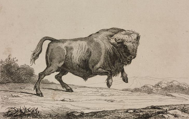 Фото №4 - Черная книга России: 5 истребленных животных, когда-то обитавших на территории нашей страны