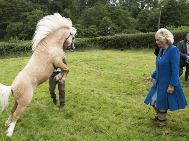 Фото №3 - Диета Камиллы: как герцогиня поддерживает себя в форме