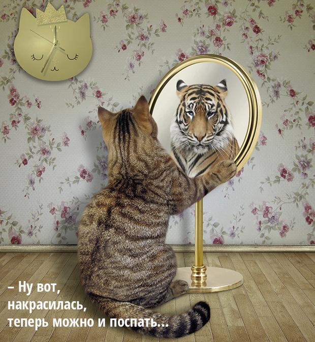 Фото №5 - Код кота: 31 ответ на вопросы котовладельца