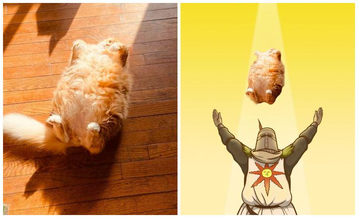 Фото №1 - Пухлый кот, греющийся на солнышке, стал героем мемов