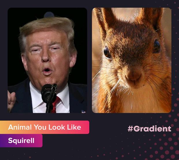 Фото №3 - На какое животное ты похож: новое развлечение от приложения Gradient