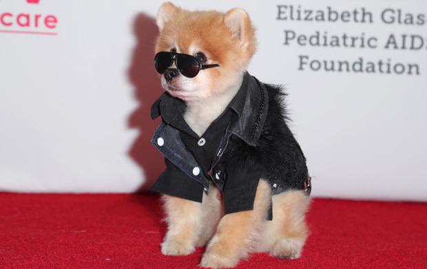 Фото №1 - Найден самый стильный пес в мире