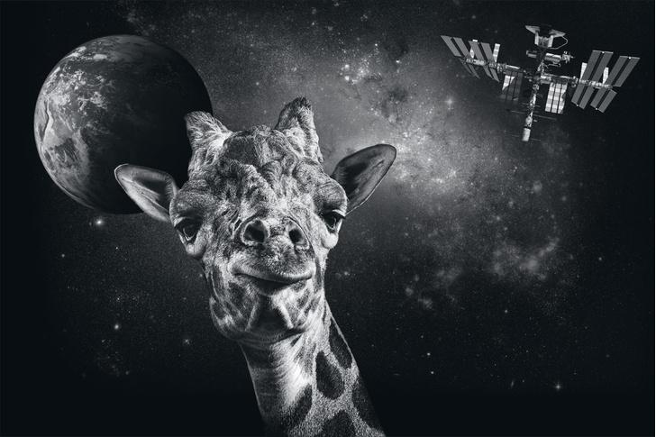 Фото №1 - Природный прототип: животные, подсказавшие идеи создателям космического оборудования