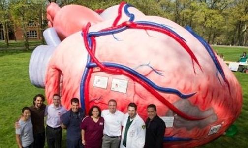 Фото №1 - В Юсуповском саду покажут 7-метровое сердце и очки-симуляторы опьянения