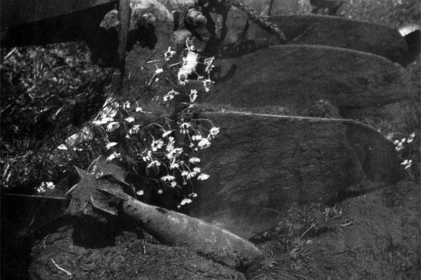 Фото №1 - Эхо Курской битвы