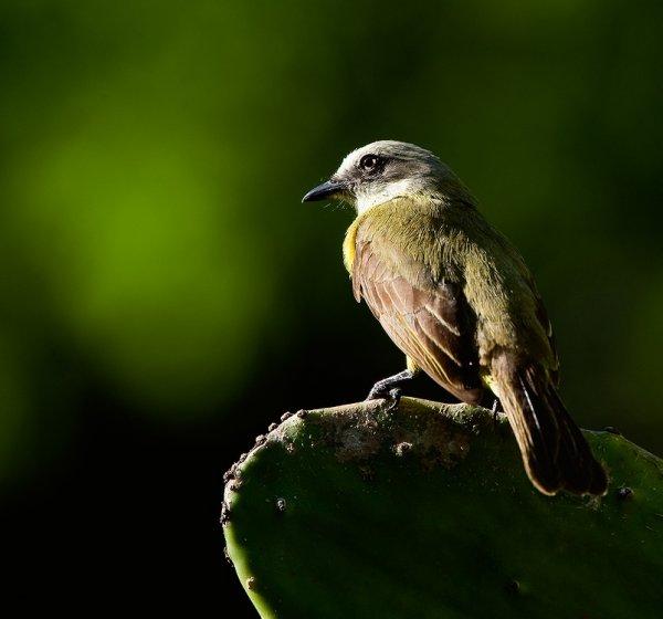 Фото №3 - Добрая улыбка птицы