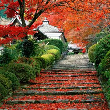 Осенний Киото так красив, что посмотреть на его шикарные парки съезжаются тысячи туристов.