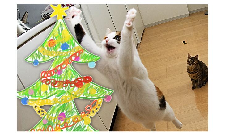 Фото №1 - Настойчивая кошка не оставляет попытки свалить нарисованную елку (видео)