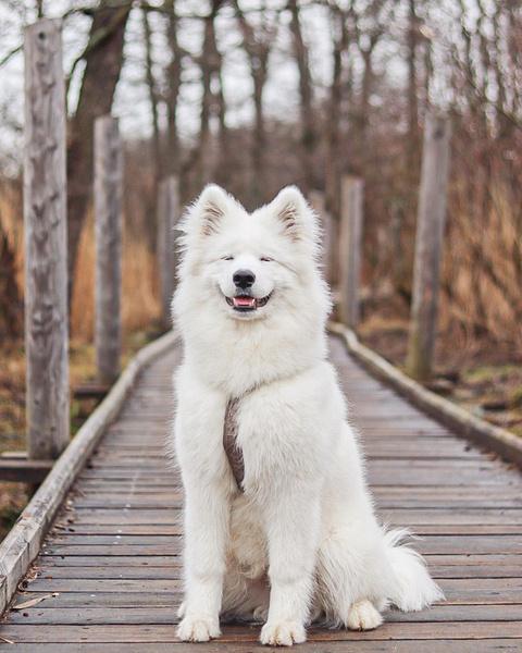Фото №4 - Если собака без поводка: 15 фото песиков до и после прогулки