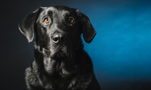 Фото №1 - После укуса собственной собаки 11-летний ребенок умер от энцефалита