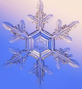 Фото №1 - Снег вызывают бактерии