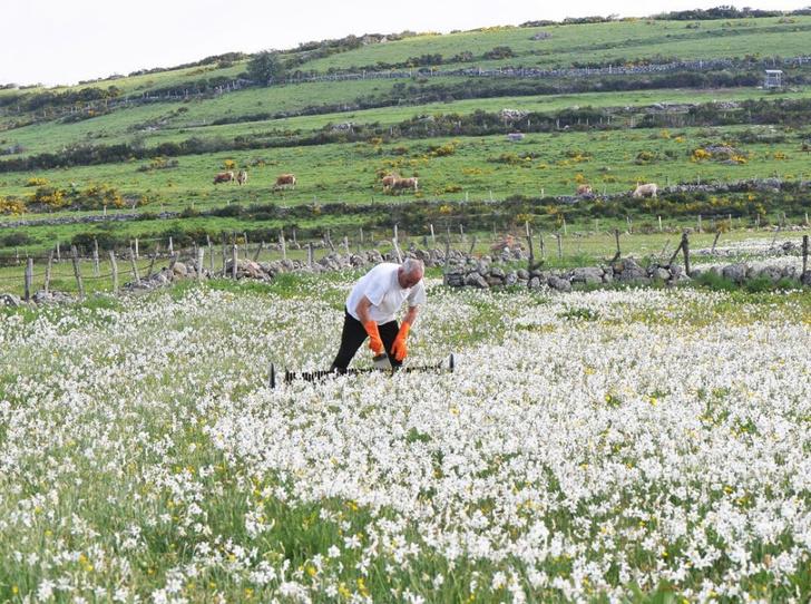 Фото №7 - Для влюбленных в весну: лучшие ароматы с мимозой и нарциссом