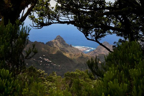 Фото №6 - Уютная дикость «собачьих островов»