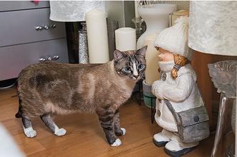 Фото №5 - «Где шесть, там и семь»: кошкин дом Наталии Гулькиной
