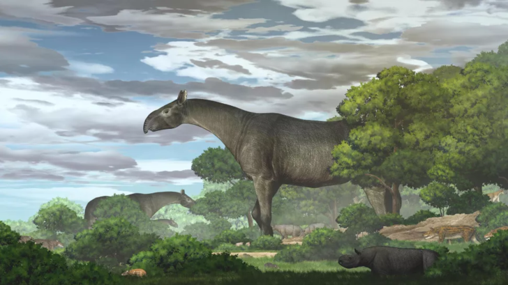 Фото №1 - В Китае нашли останки одного из самых крупных млекопитающих на Земле