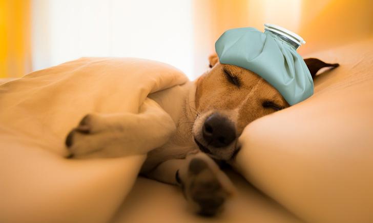 Фото №1 - Болит ли у собак голова?