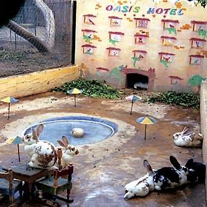 Фото №1 - Новый отель для кроликов в Тунисе