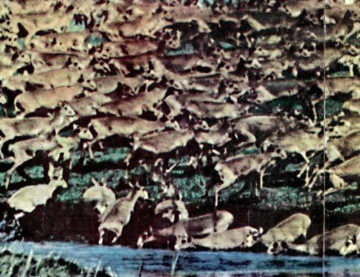 Фото №1 - Есть ли у диких животных завтрашний день?