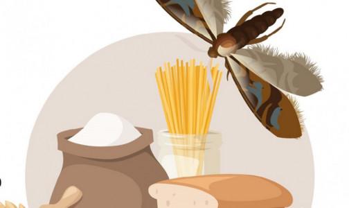 """Фото №1 - """"Пищевая моль"""" может стать причиной дерматита, конъюктивита и астмы. Как бороться с проникшим в дом вредителем"""