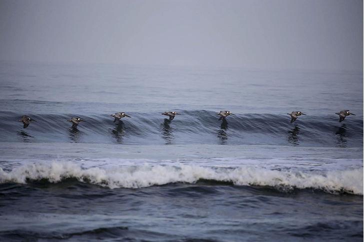 Фото №1 - На гребне волны