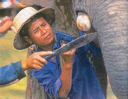 Фото №1 - Слон в поисках друзей