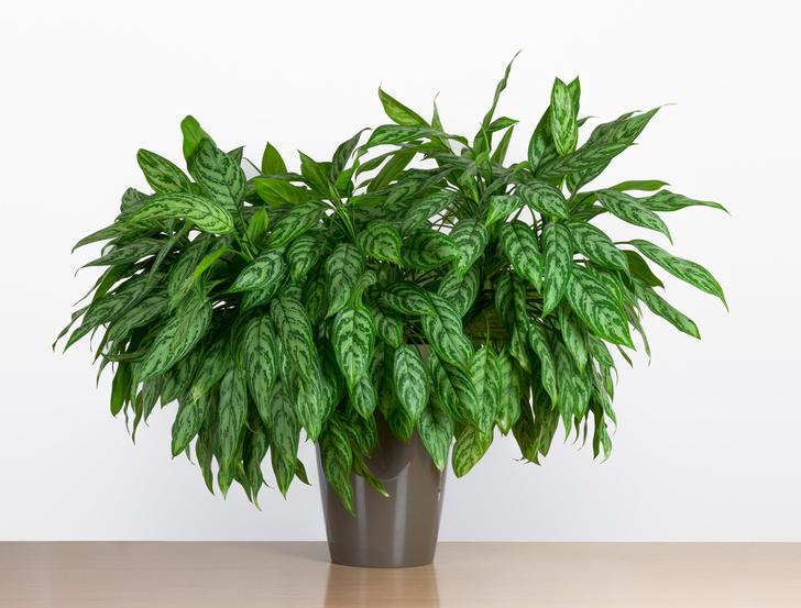 Растения растущие в тени