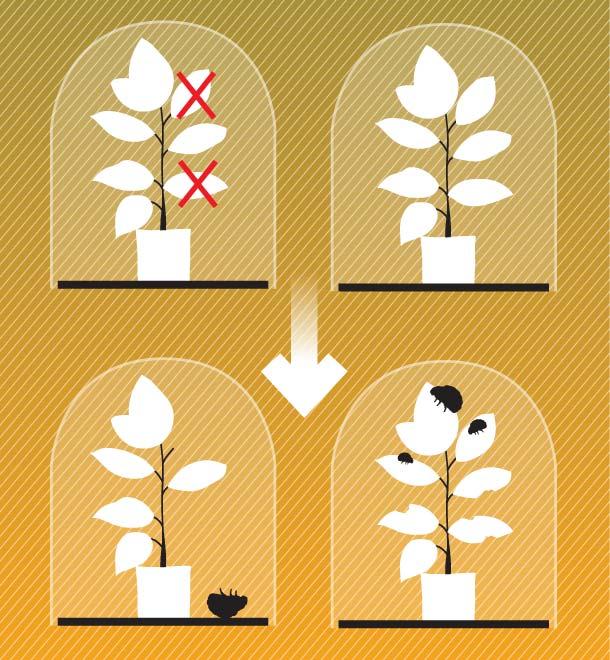 Фото №9 - Здравствуй, дерево! Тайная жизнь растений