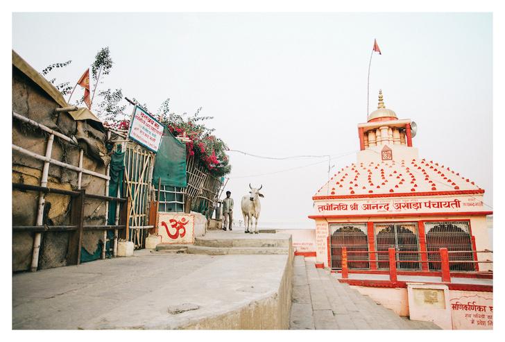 Фото №1 - Личный опыт: как уехать в Индию, чтобы помогать больным и бездомным