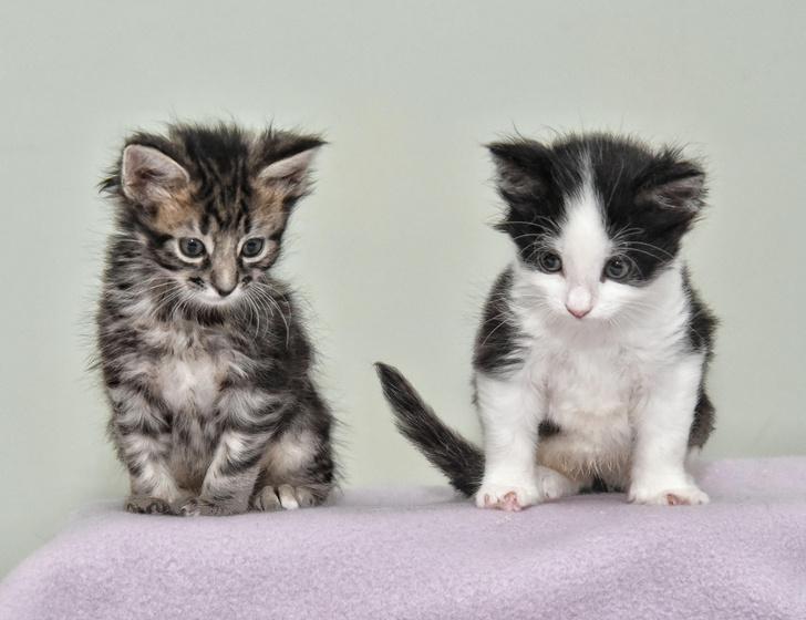 Фото №1 - Ученые проверили кошек на преданность