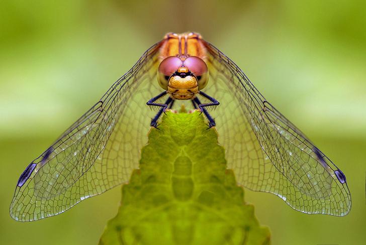 Фото №1 - Ученые предрекли скорое исчезновение насекомых